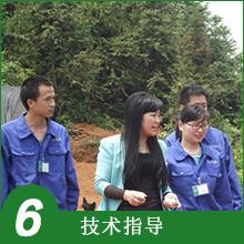6.技术指导
